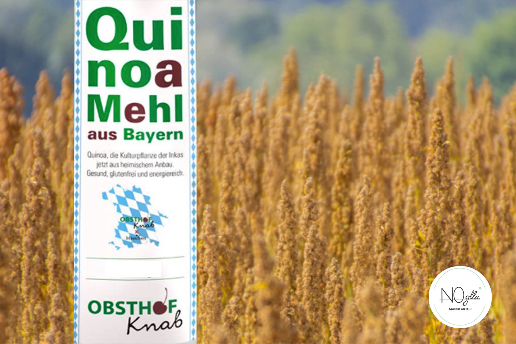 Quinoa the gluten-free superfood now from Bavaria